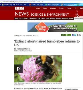 BBC Bumblebee Story