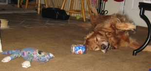 dog and peanut butter