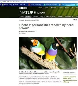BBC finches