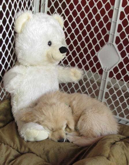 Puppy and Teddy Bear