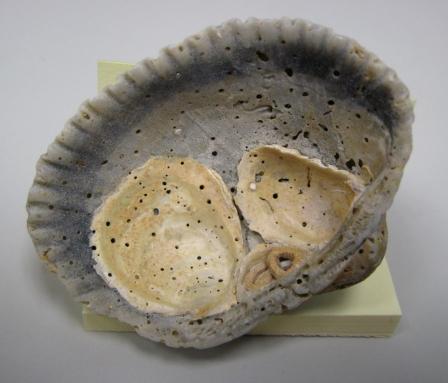 neat shell