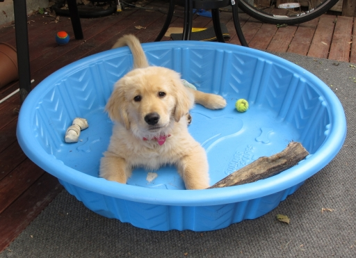 Gem in his pool