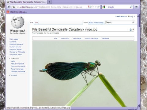 Wiki pic Damselfly