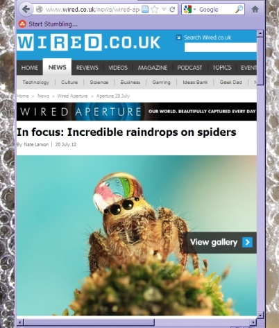 Wired UK spider photos