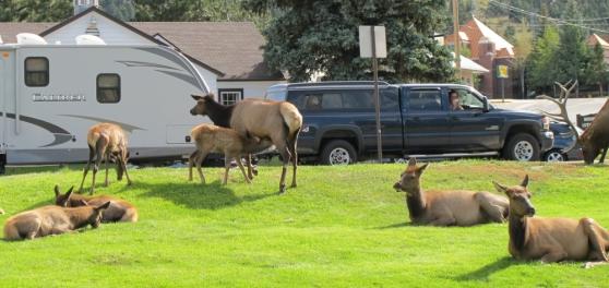 August in Estes Park