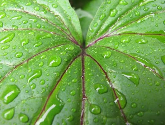 Green Alaska