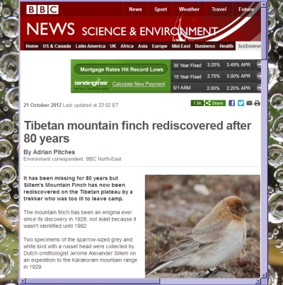 BBC News story on Tibetan mountain finch