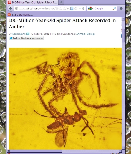 Wired spider in amber story