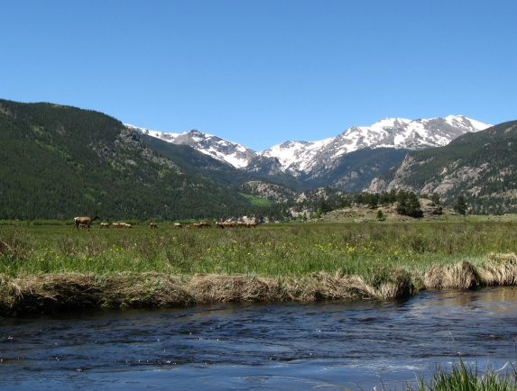 Elk graze in Moraine Park, Rocky Mountain National Park, Colorado, USA.