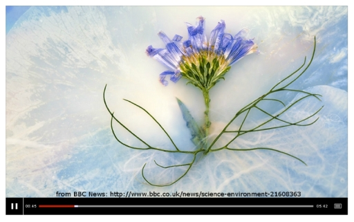 BBC News/ International Garden Photographer of the Year Slide Show