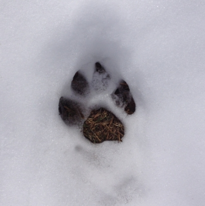 Gem's pawprint