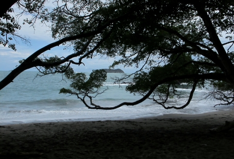 The trees where the monkeys and raccoons live are right next to the beach at Manuel Antonio National Park. Photo by keagiles.