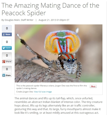 Screenshot from a LiveScience article about peacock spiders. I truly am amazed!
