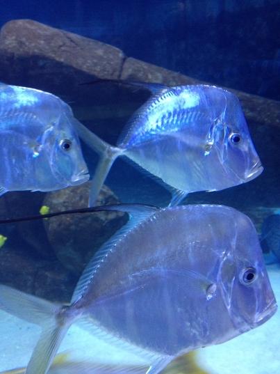 I captured this fish in Idaho — at the Idaho Public Aquarium. Photo by keagiles.