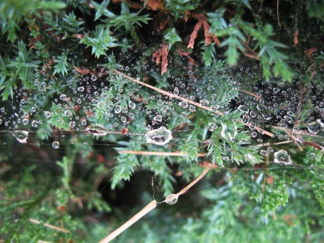 waterdrops518